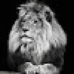 Fallou Mbow Profile Picture