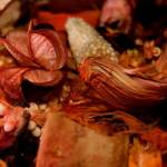 PotPourri Profile Picture